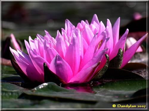 fleur070501